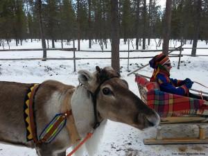 Winter_Highlights_Lappland