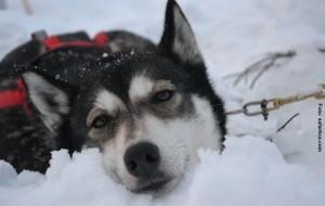 Lapplandreise Winterwoche