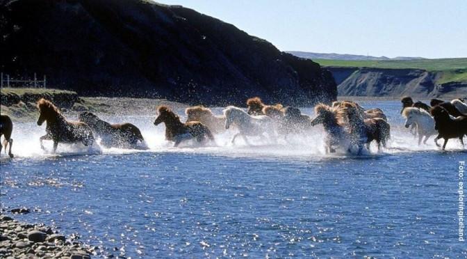 Island Wanderreiten Kjölur