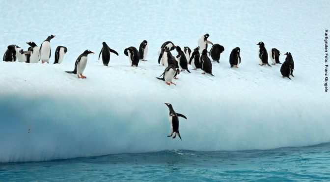 Antarktis Reisen 2018