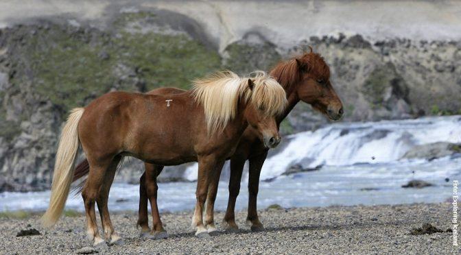 Island Wanderreiten Landmannalaugar