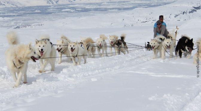 Grönland Hundeschlittentour