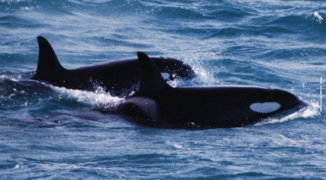 Nordlichter und Wale