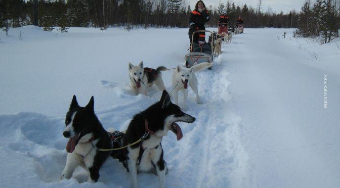 Husky Tour Norwegen