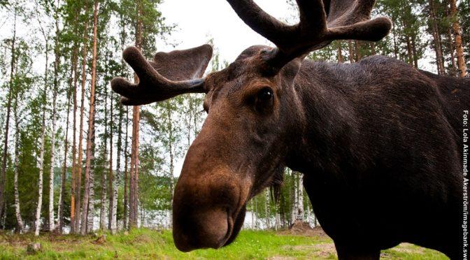 Hüttenurlaub Schweden