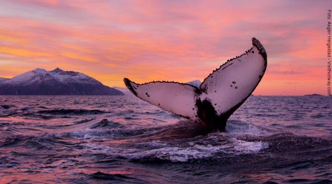 Postschiff, Polarlichter und Wale Norwegen