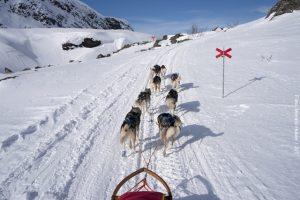 Schweden Winter Reisen - Husky Safari