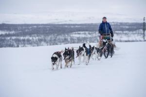 Lappland Huskytour Schlitten