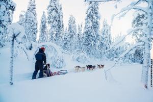 Glasiglus Finnland, Huskies