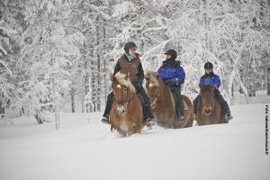 Glasiglus Finnland, Kakslauttanen,  Pferde-Safari