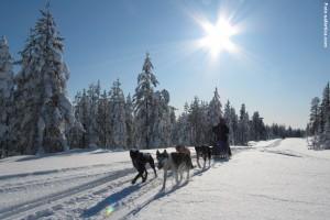 Hundeschlittentour Lappland