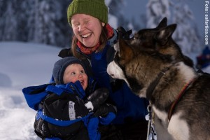 Huskies-in-Lappland