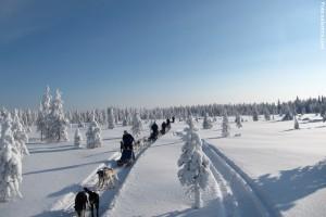 Huskytour-in-Lappland