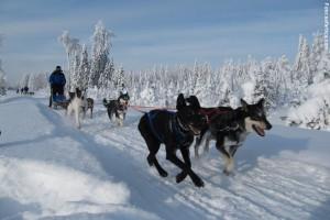 Huskytour Finnland