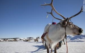 Finnlandreise-Winter-und-Sami