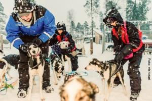 Huskeyschlitten-Winterreise-Finnland