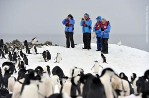 Antarktis Pinguine