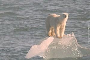 Arktis-Reisen Eisbaeren
