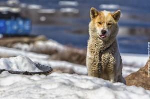 Arktisreisen Groenland