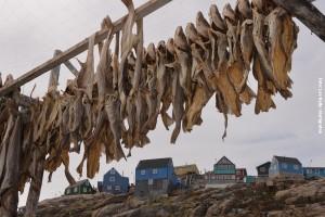 Groenland-Hurtigruten