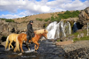 Pferde und Wasserfaelle