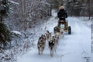 Norwegen Husky-Tour