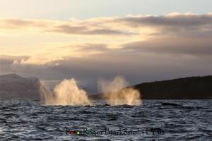 Norwegen Sonnenuntergang Wal
