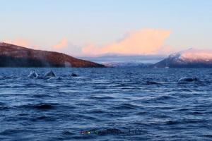 Norwegen Wale