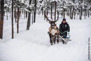 Eishotel-Schweden, Rentierschlitten