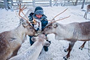 Lapland Huetten Rentiersafari