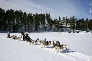 Finnland Winterreisen Husky-Tour