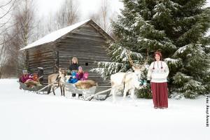 Rentierschlitten Tour Karelien