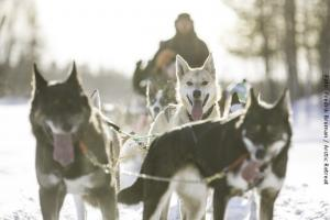 Hundeschlitten-Tour