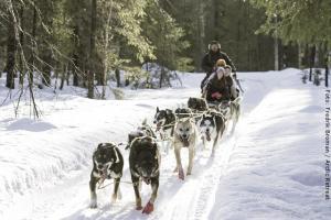 Hundeschlitten-Tour durch Lappland