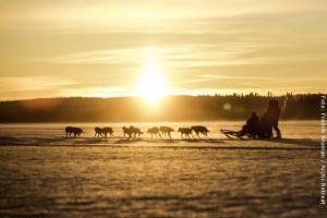 Hundeschlitten-Tour in Lappland