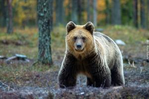 Sommer Abenteuerurlaub Finnland
