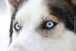 Finnland_Hundeschlitten_Safari