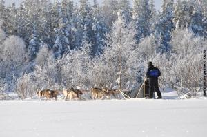 Finnland_Husky-Safari