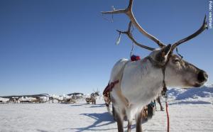 Finnlandreise - Winter und Sami