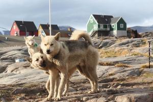 Groenland Kreuzfahrt Uummannaq