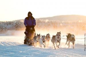 Husky-Safari Lappland NLV