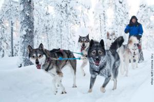 Husky Safari Lappland