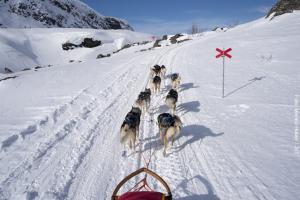 Husky Safari Schweden - Lappland