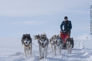 Husky Safari Schweden - Hundeschlitten