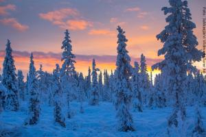 Schneemobil Safari Schweden - Winterwald