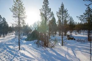 Lapplandreise Rentiere Utsjoki