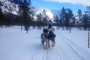 Husky Safari Norwegen