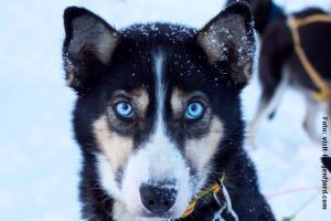 Norwegen_Hundeschlittensafari