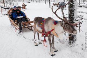 Rentier Safari NLV Lappland