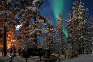 Rentiere und Nordlichter Lappland